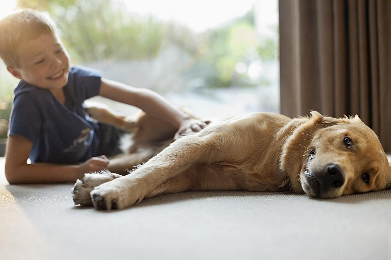 Smiling boy petting dog in living room
