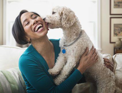 Dog licking owner