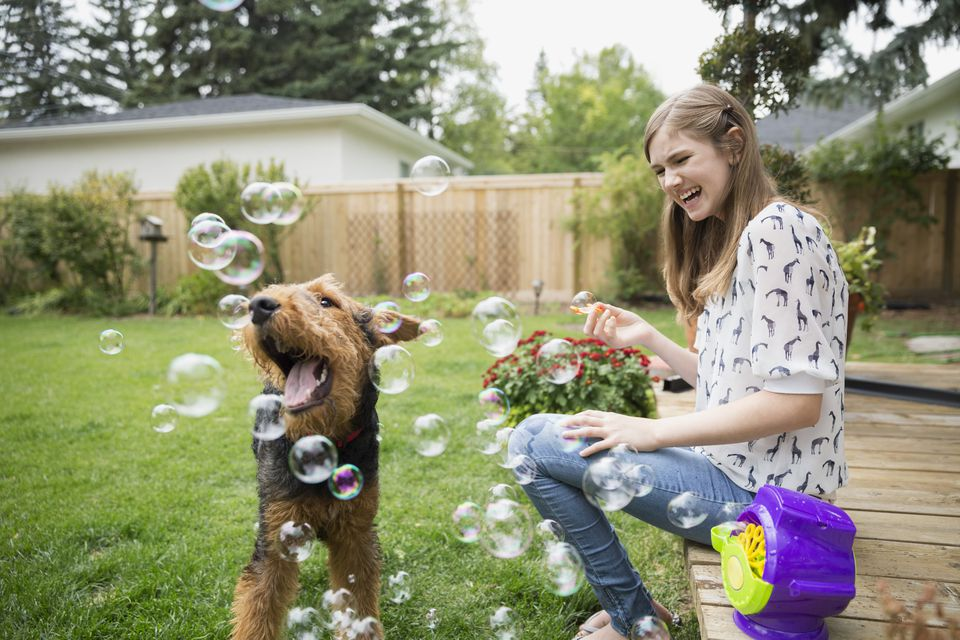 Curious dog playing with bubbles in backyard