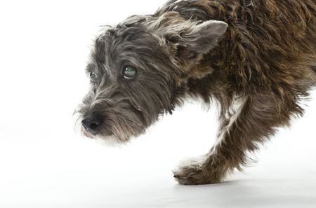 How to Treat Seizures and Brain Disease in Dogs