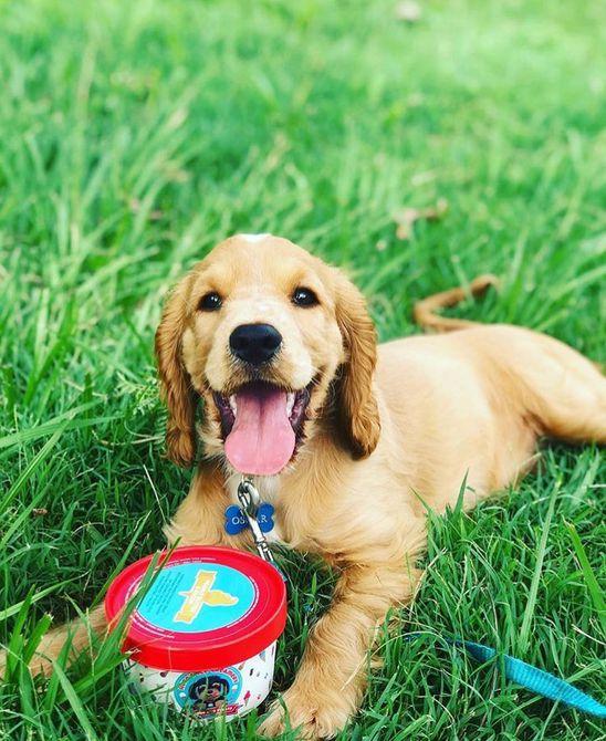 Perro feliz con una pequeña tina de helado