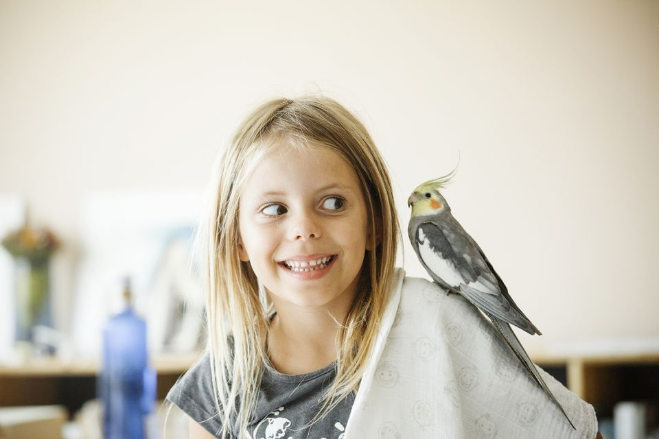 Parakeet bird on a girls shoulder