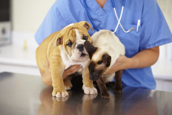 Dog and cat with a veterinarian