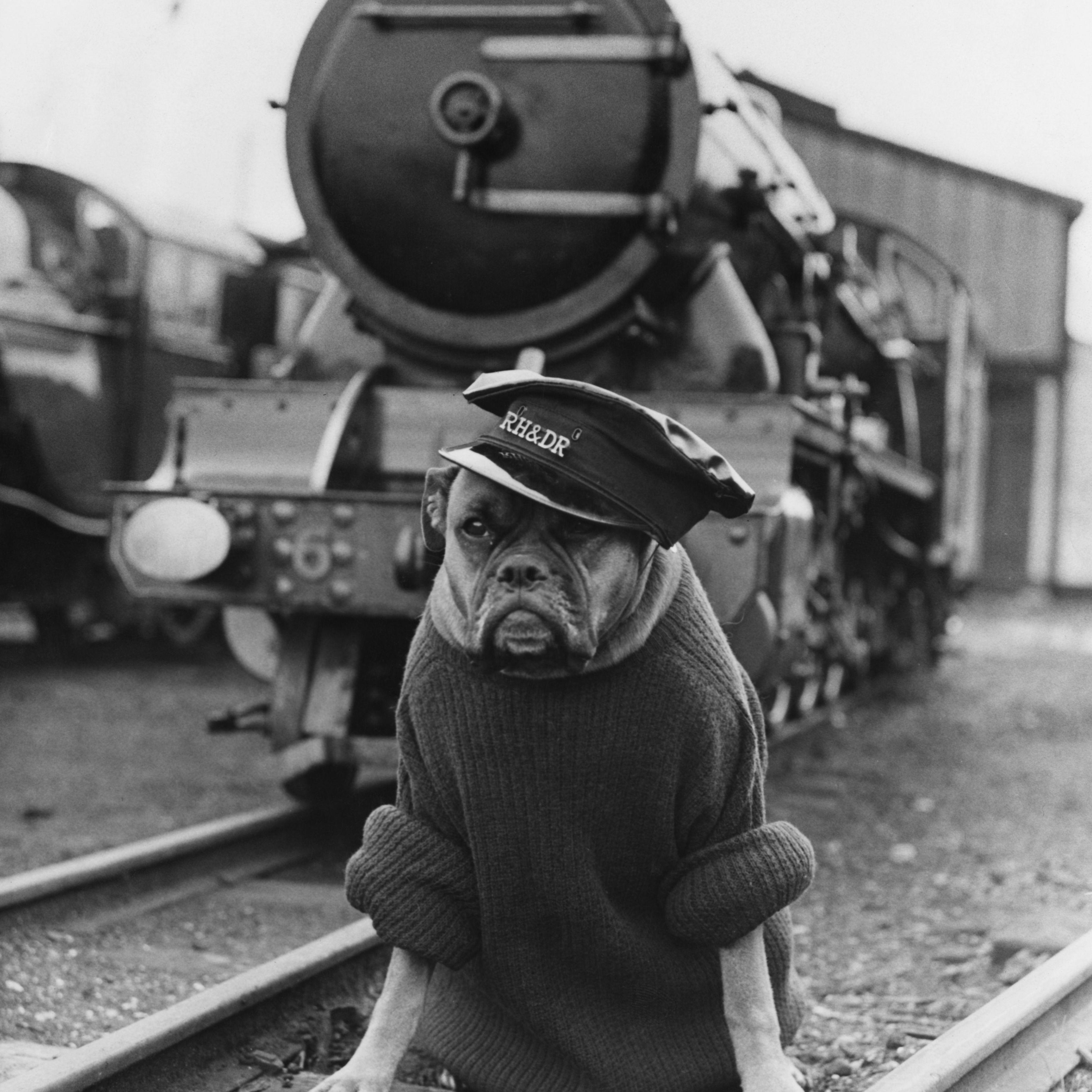 Railway guard dog