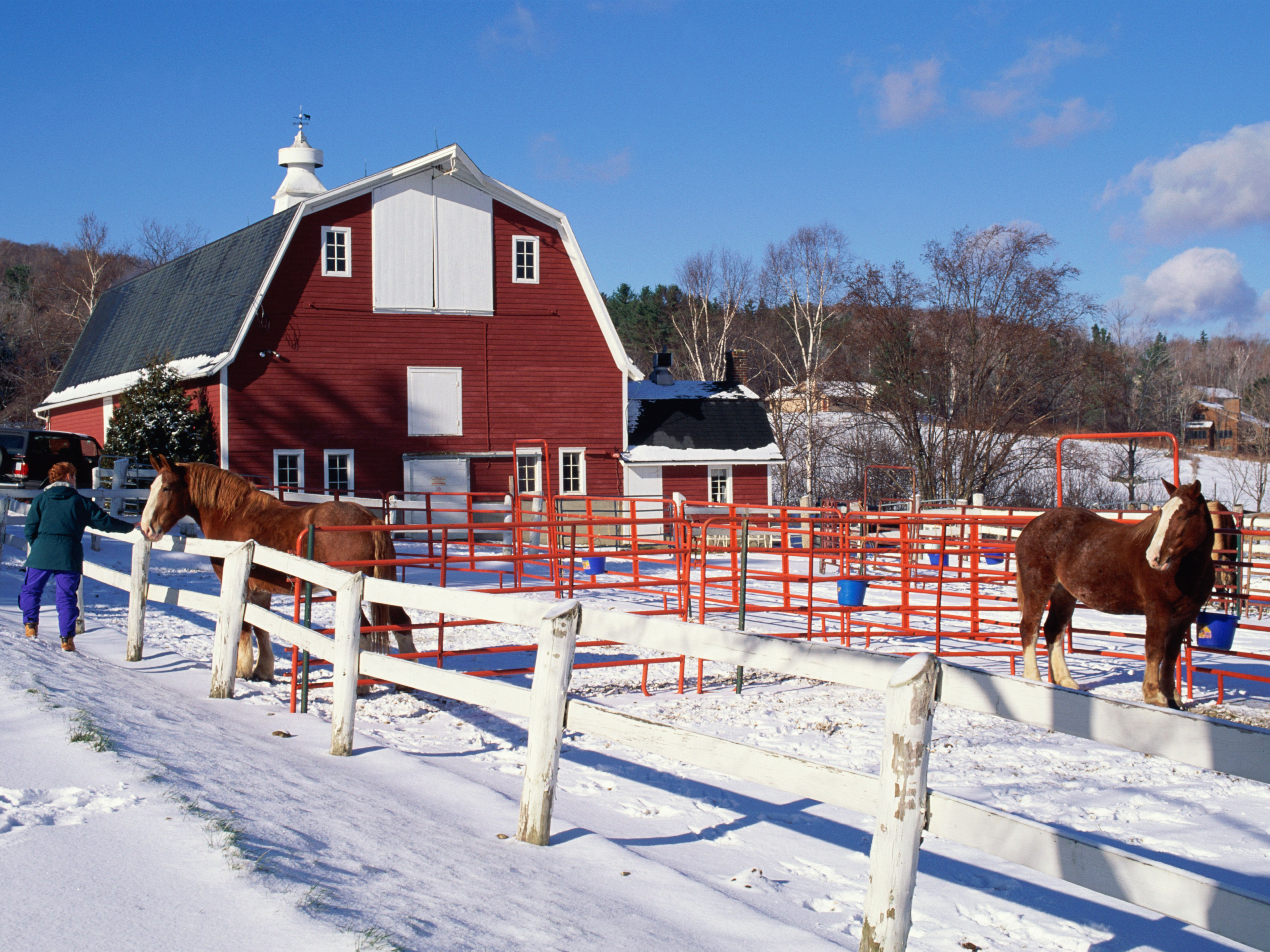 14 Winter Care Tips for Horses and Ponies