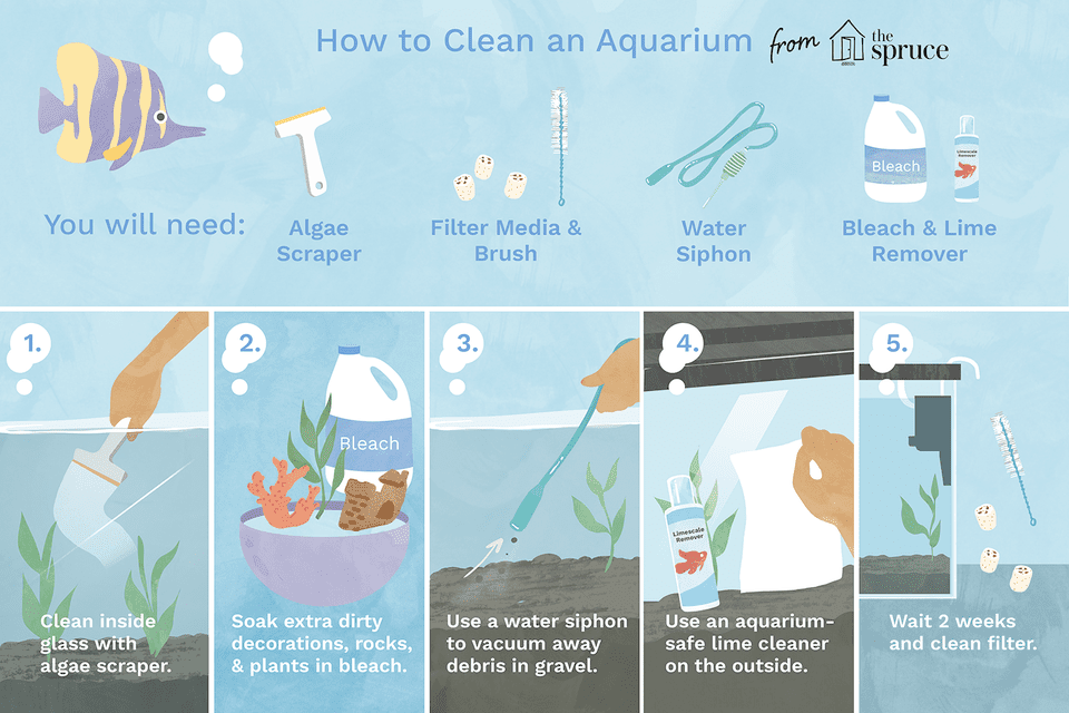 Illustration on how to clean an aquarium.