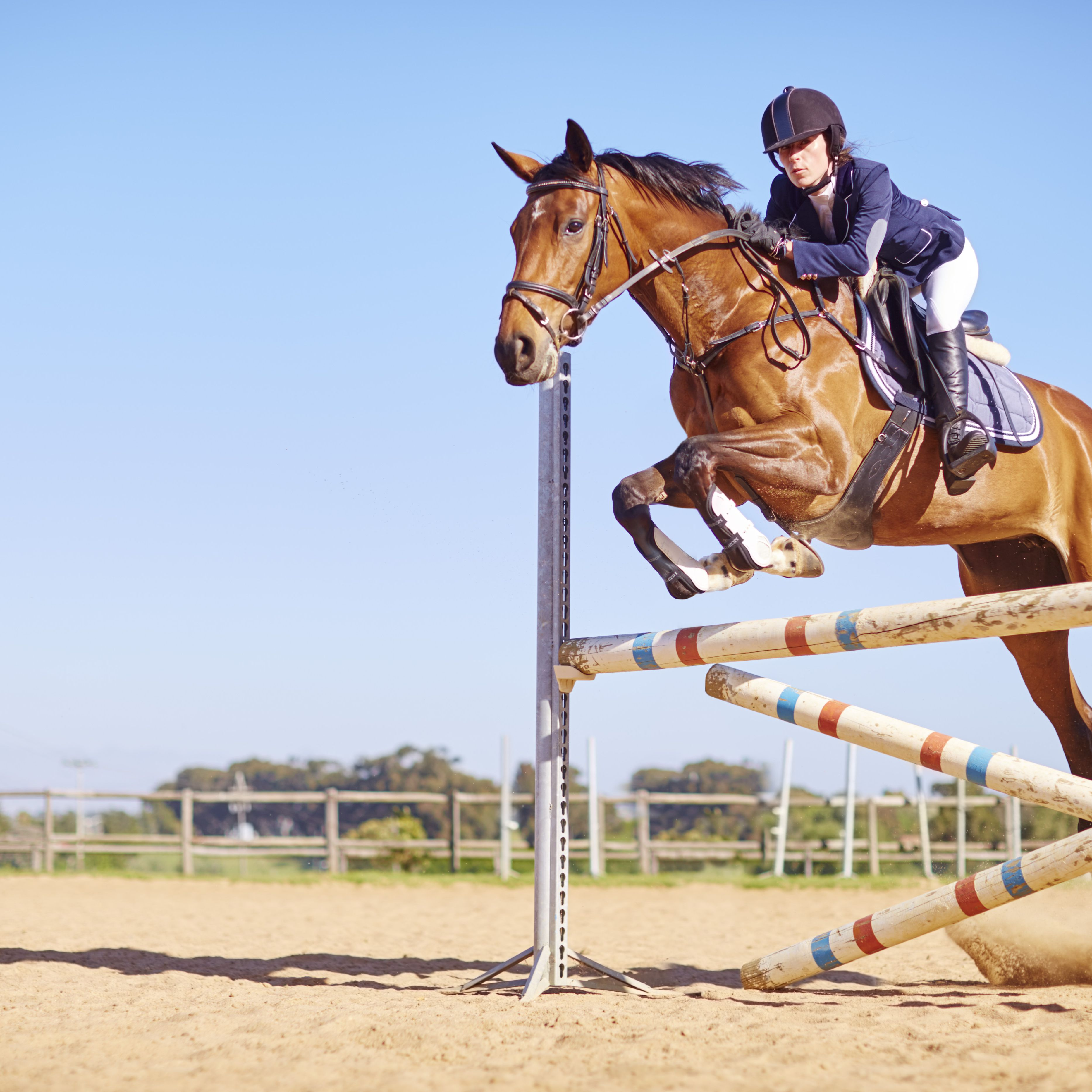 Picture of a horse jumping
