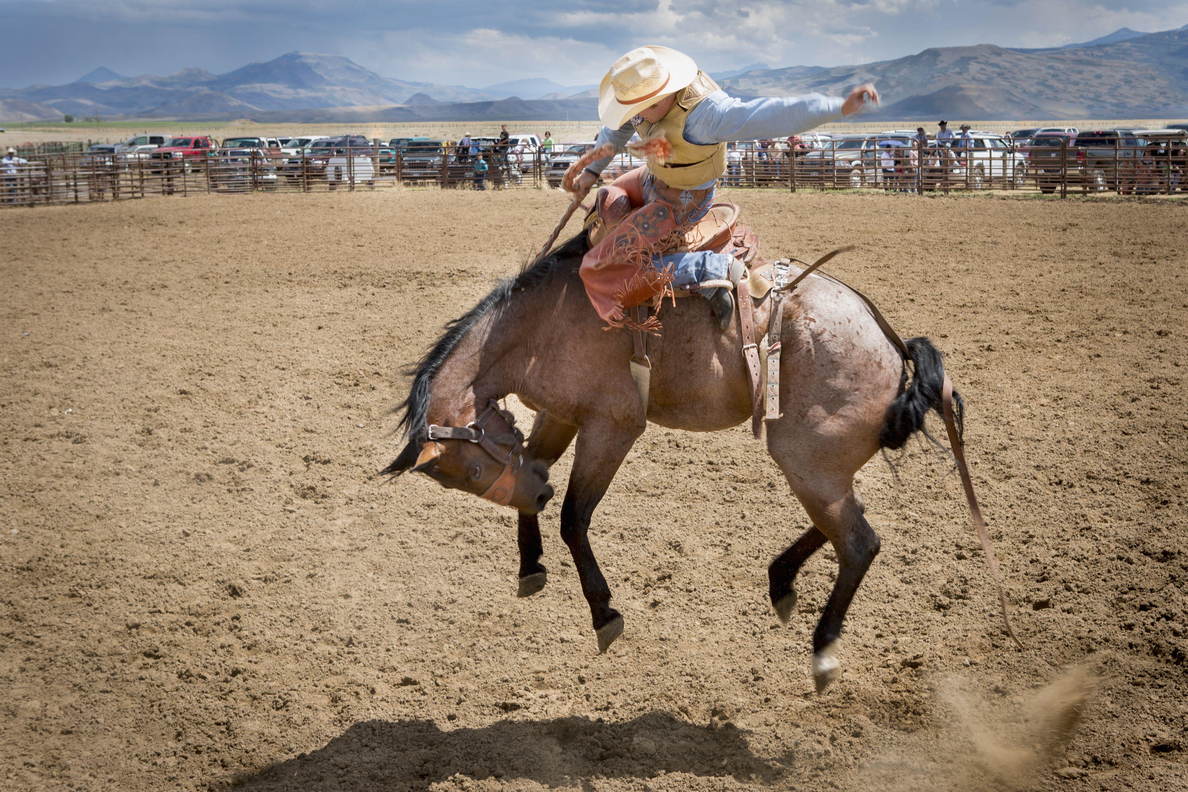 A cowboy rides a bucking horse