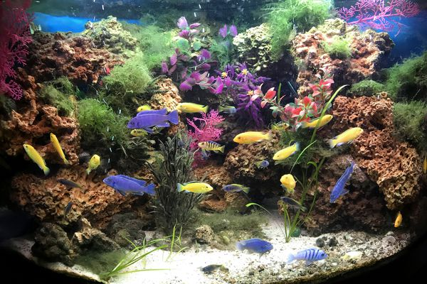 Freshwater fish tank decorated with live and fake plants