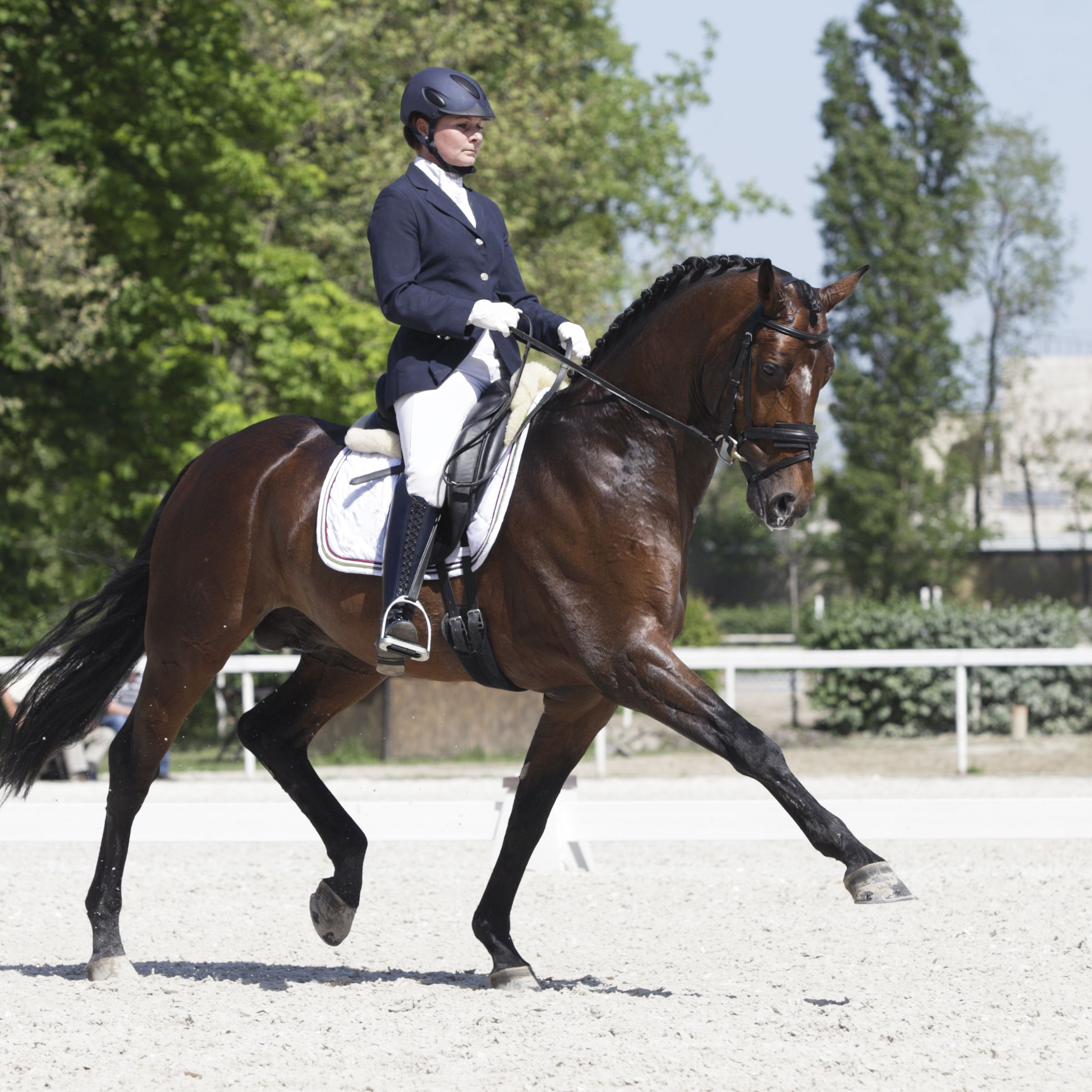An Introduction To The Sport Of Dressage Riding