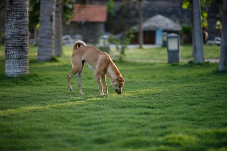 Reasons Why Dog Urine Damages Grass and How to Stop It