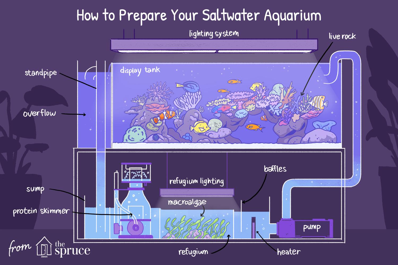 how to prepare your saltwater aquarium