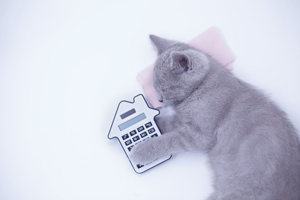 Little cat sleeping with calculator shaped like a house