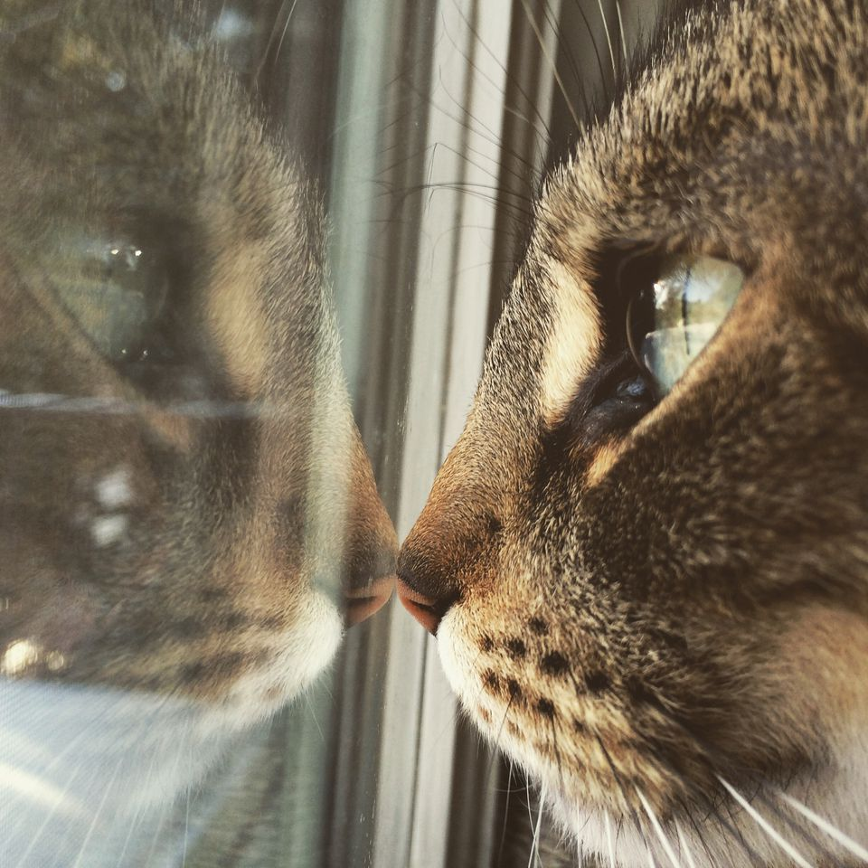 Reflexión del gato