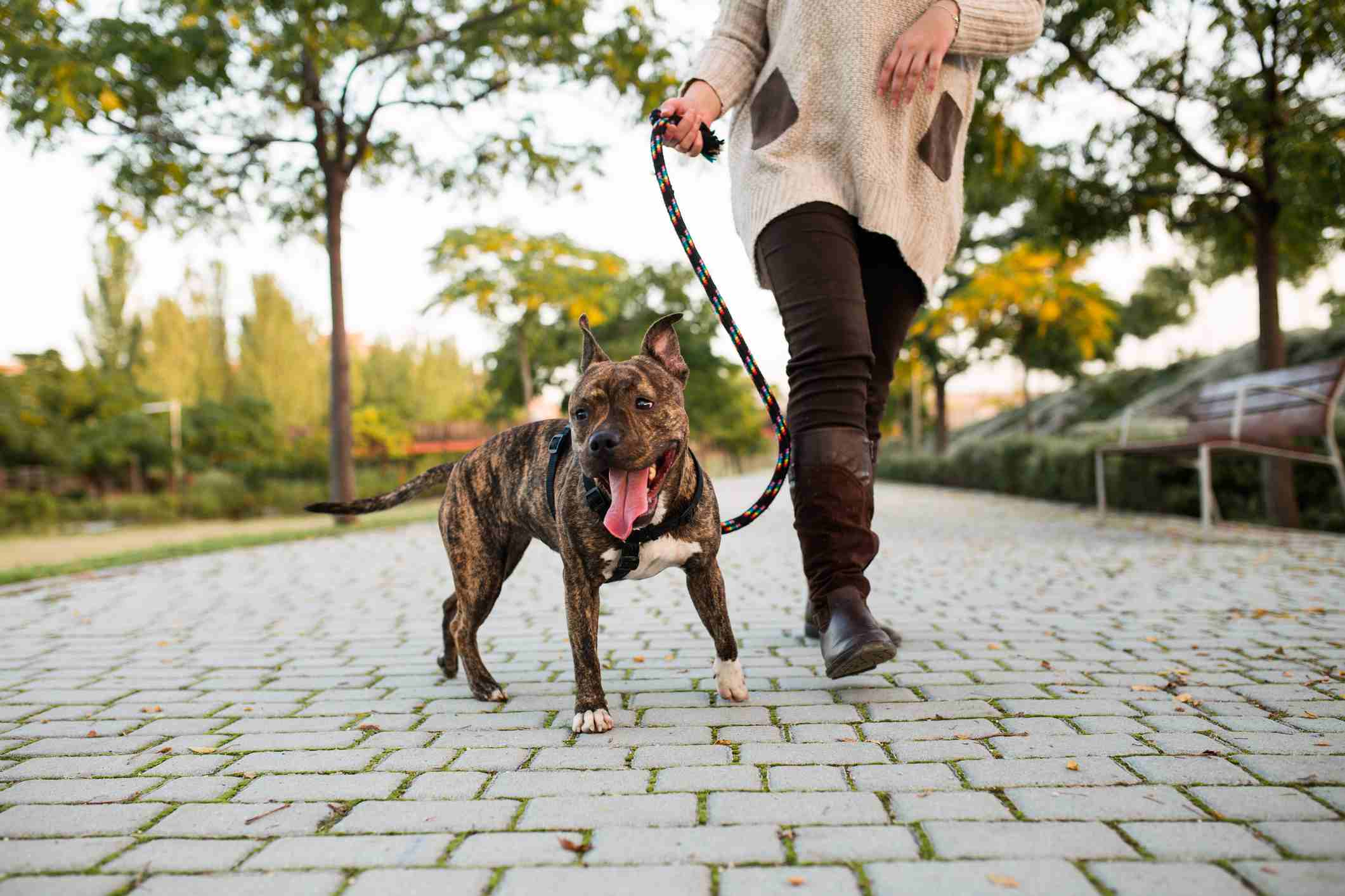 anonymous woman walking a dog