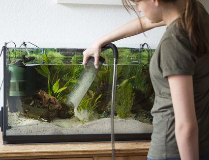 Vacuuming an Aquarium