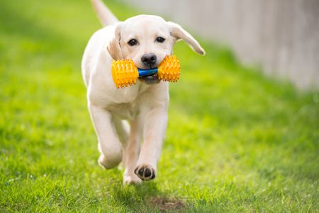 Learn About The 6 Different Types Of Retrievers