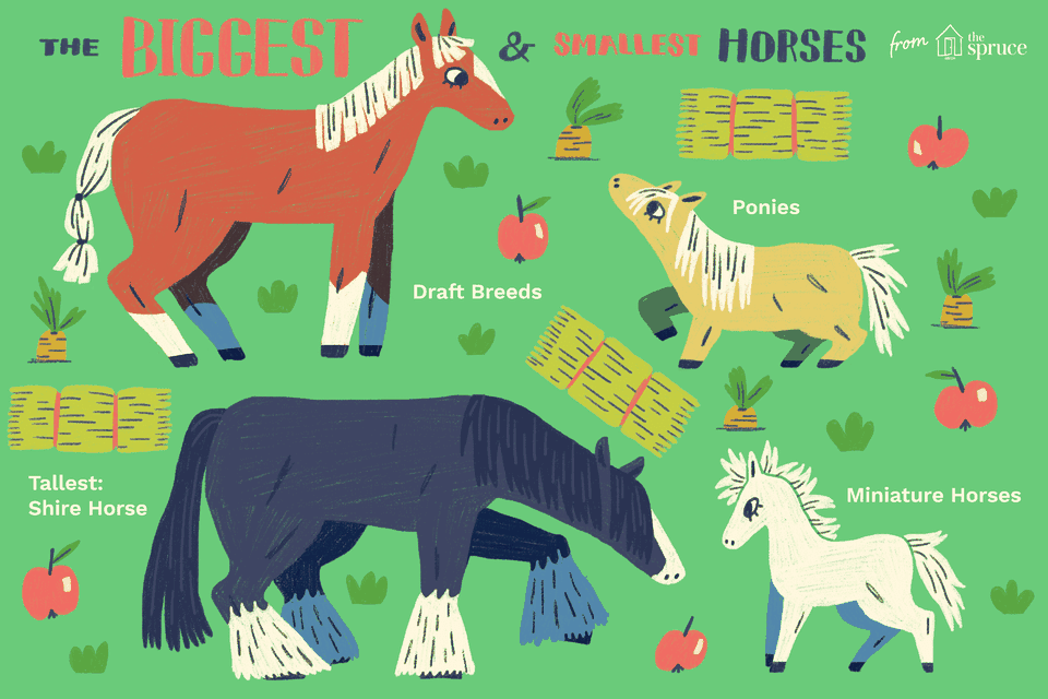 An illustration of the biggest and smallest horses