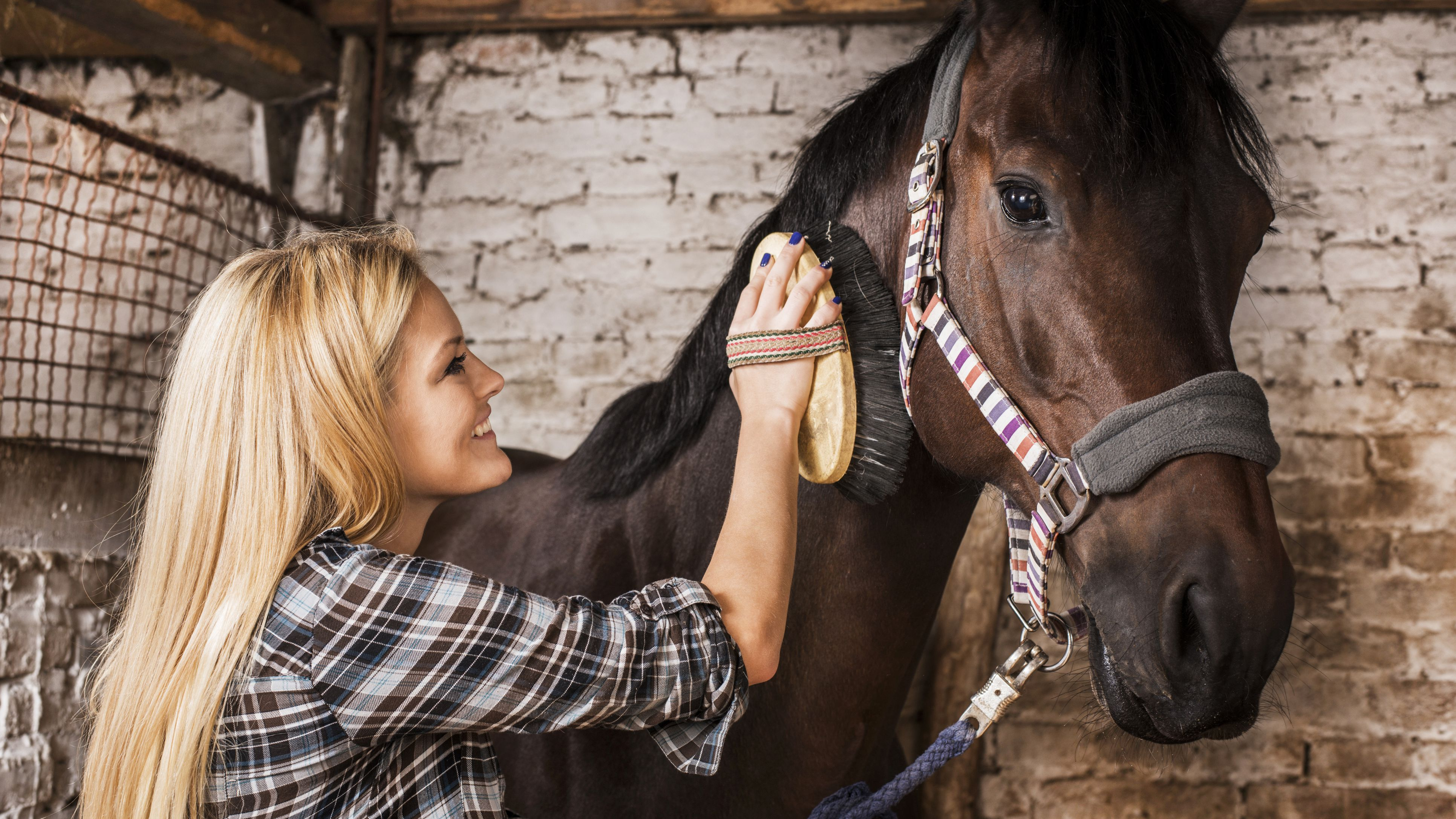 Tips and Tricks for Bonding With a New Horse
