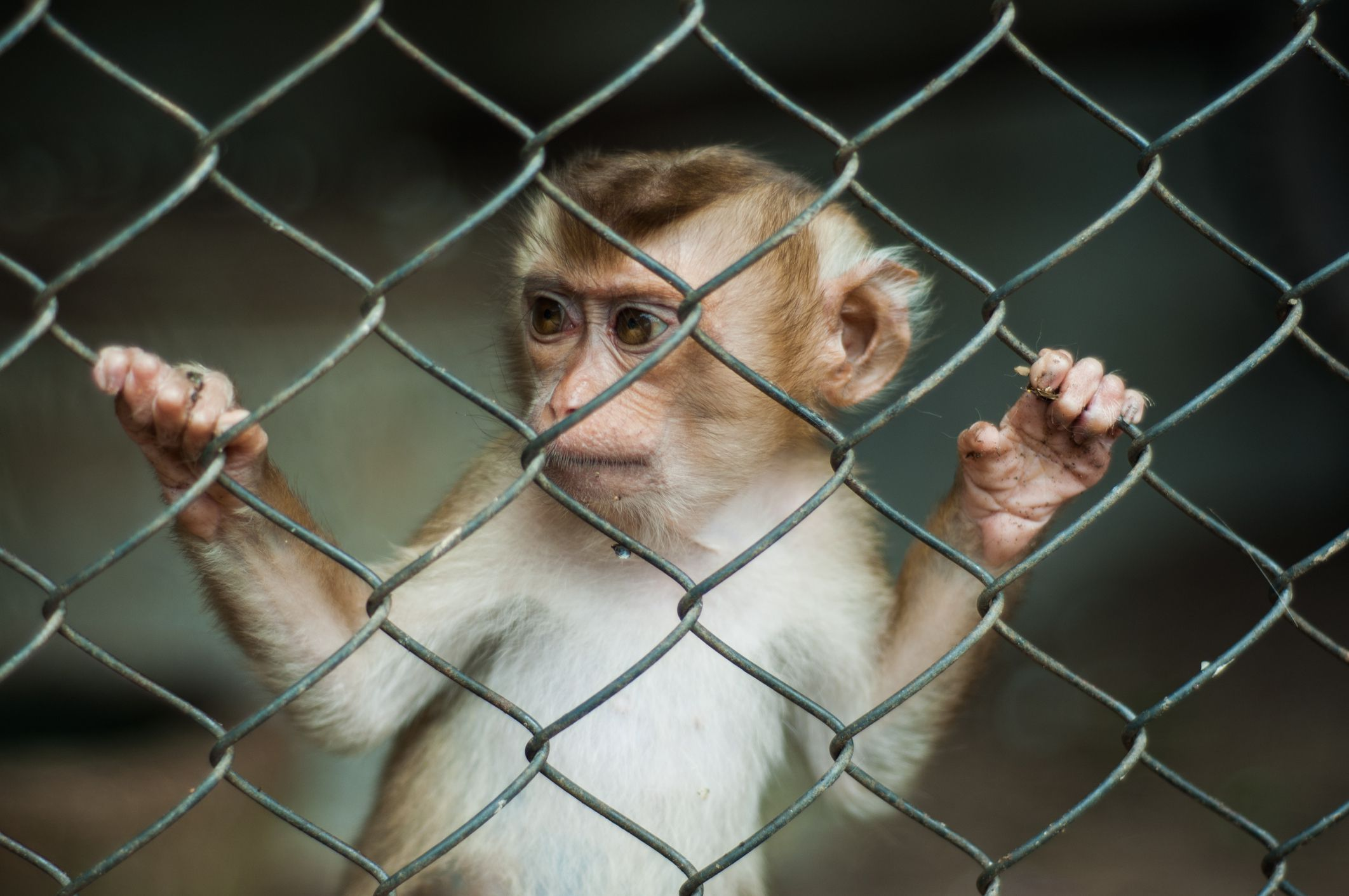 Problems With Keeping a Pet Monkey