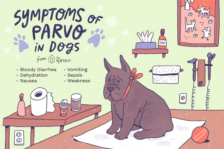 Ilustración de síntomas de Parvo en perros