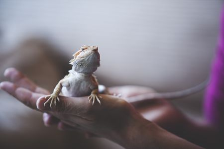 What Reptile Should I Get?