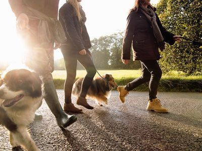 how your dog can become a canine good citizen