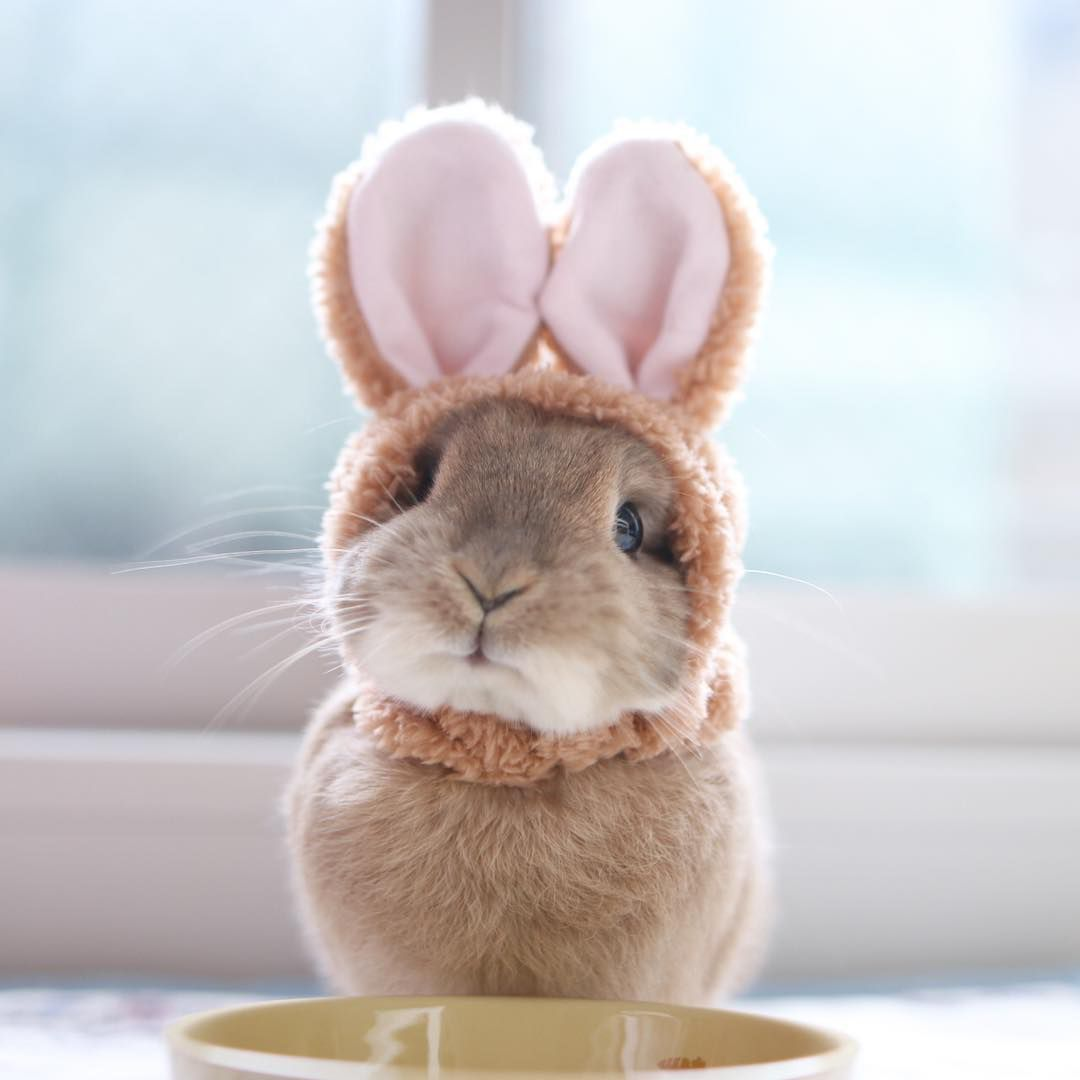 bunny wearing bunny ears