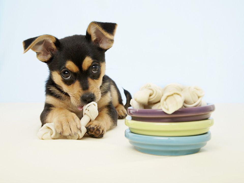 Cachorro masticando cuero crudo