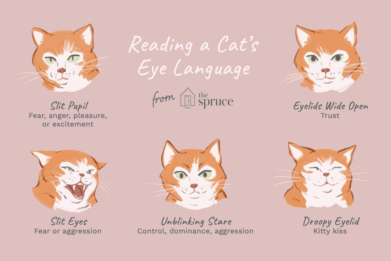Illustration for reading cat eye's language