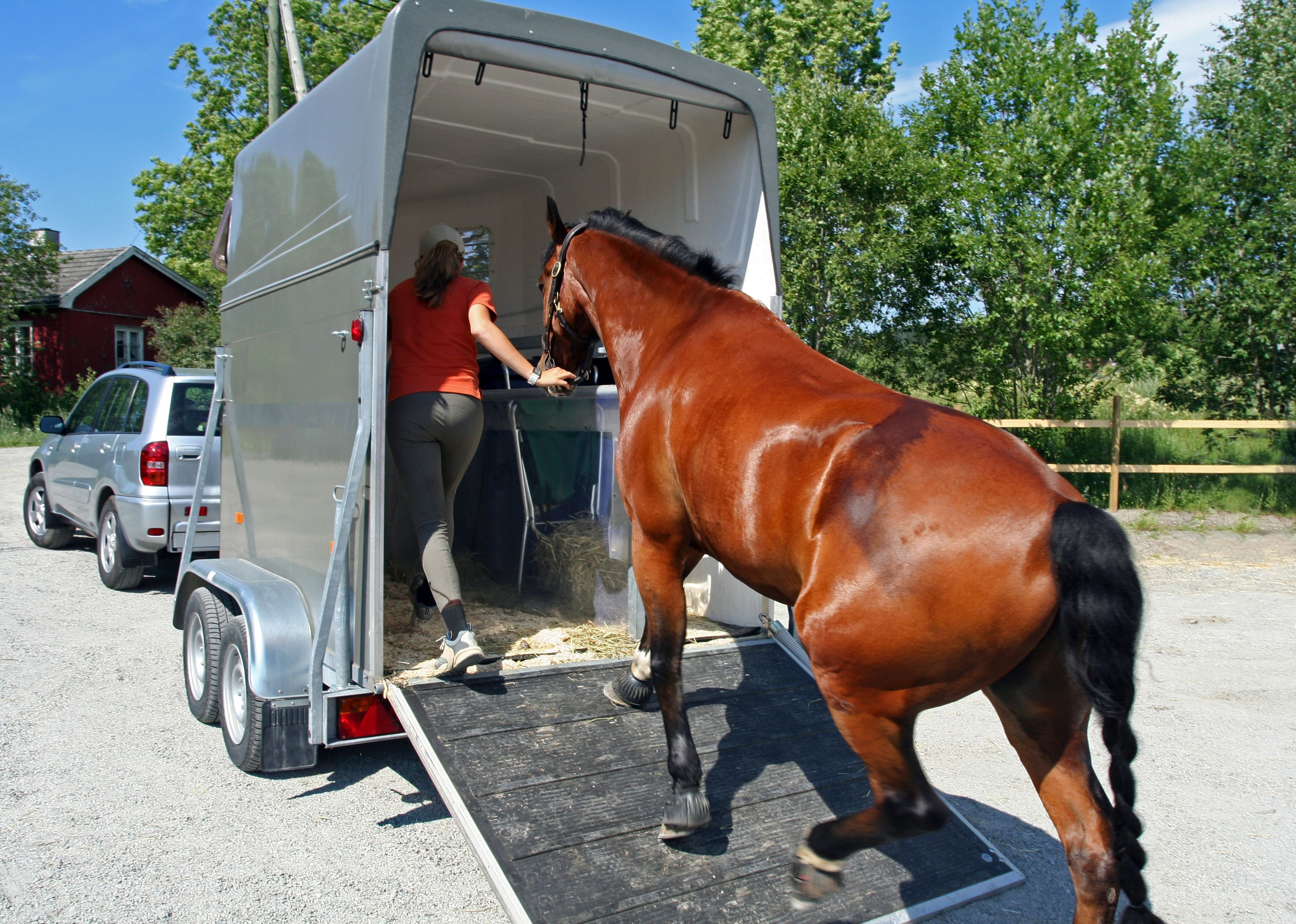 Lady leading horse up ramp into trailer