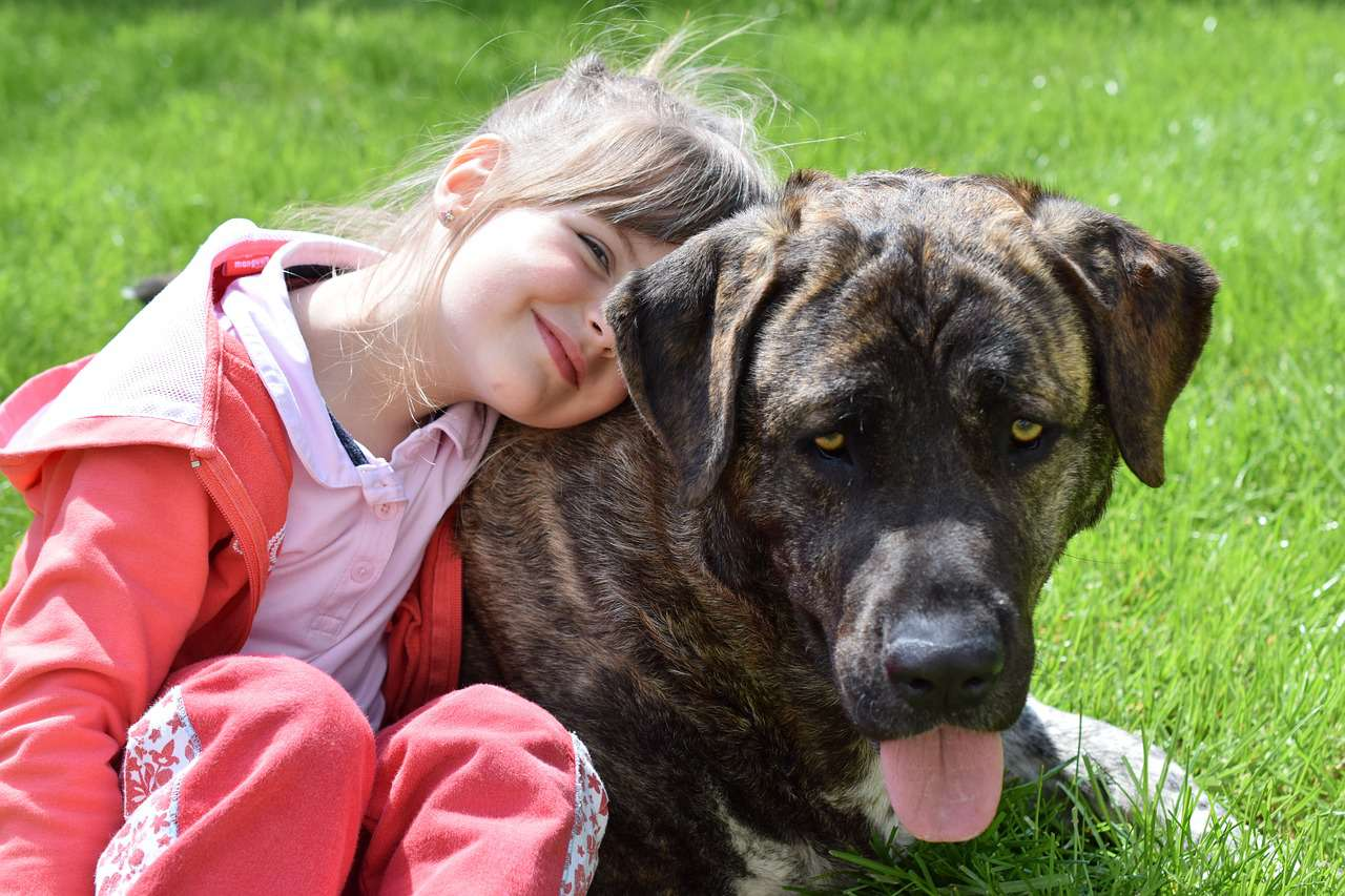 Niña abrazando a un perro grande en la hierba . , Hombre discapacitado con su perro de servicio en un parque , niño pequeño con dos perros , Cuidado