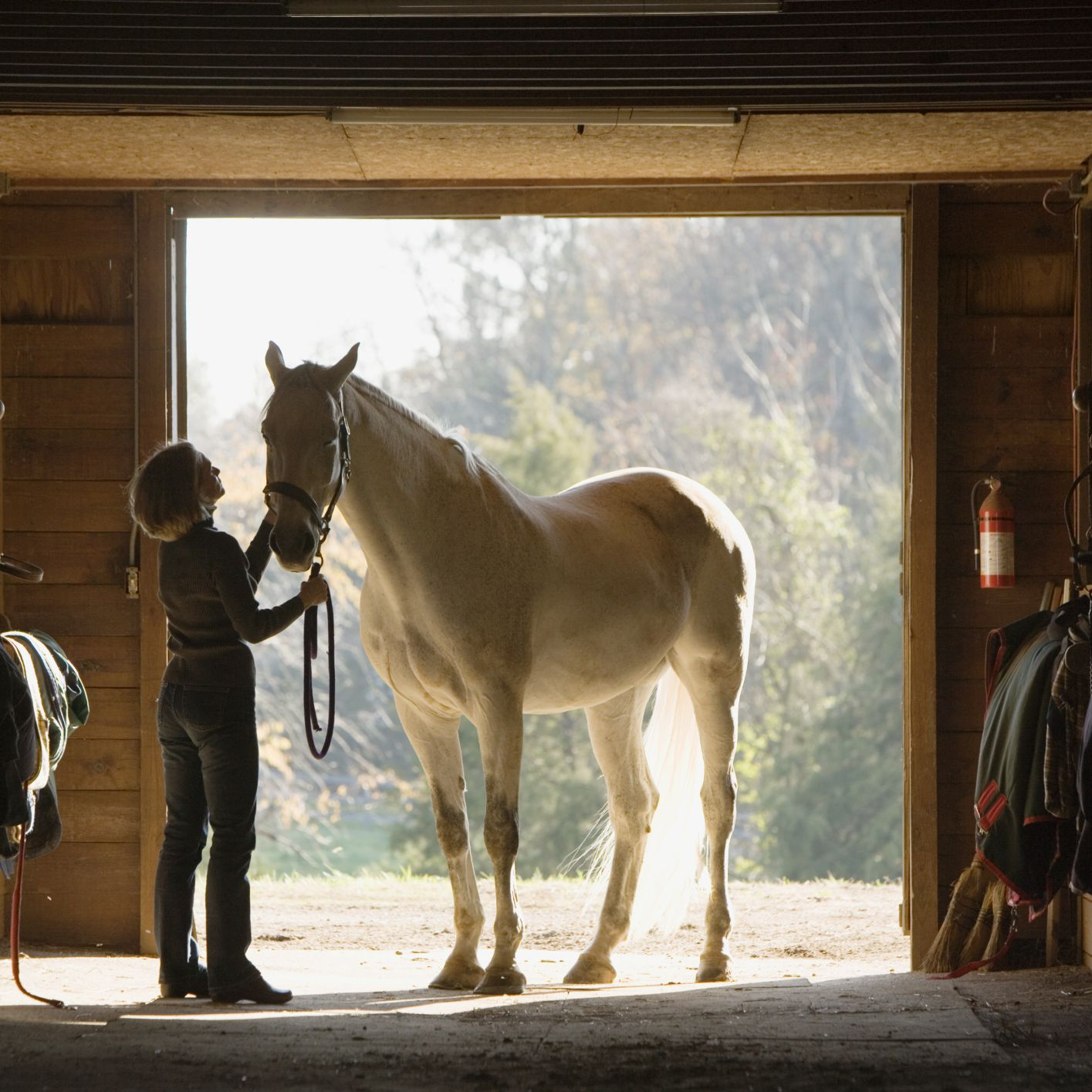 Horse Barn Names For Mares | Minimalist Home Design Ideas