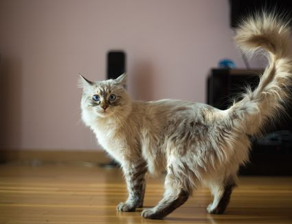 cat litter in bulk