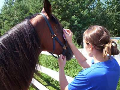 A woman cleaning a horse's eyes and ears