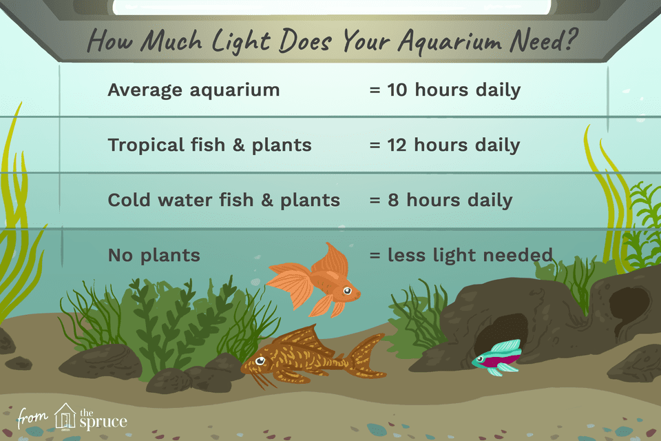 illustration of how much light an aquarium needs chart
