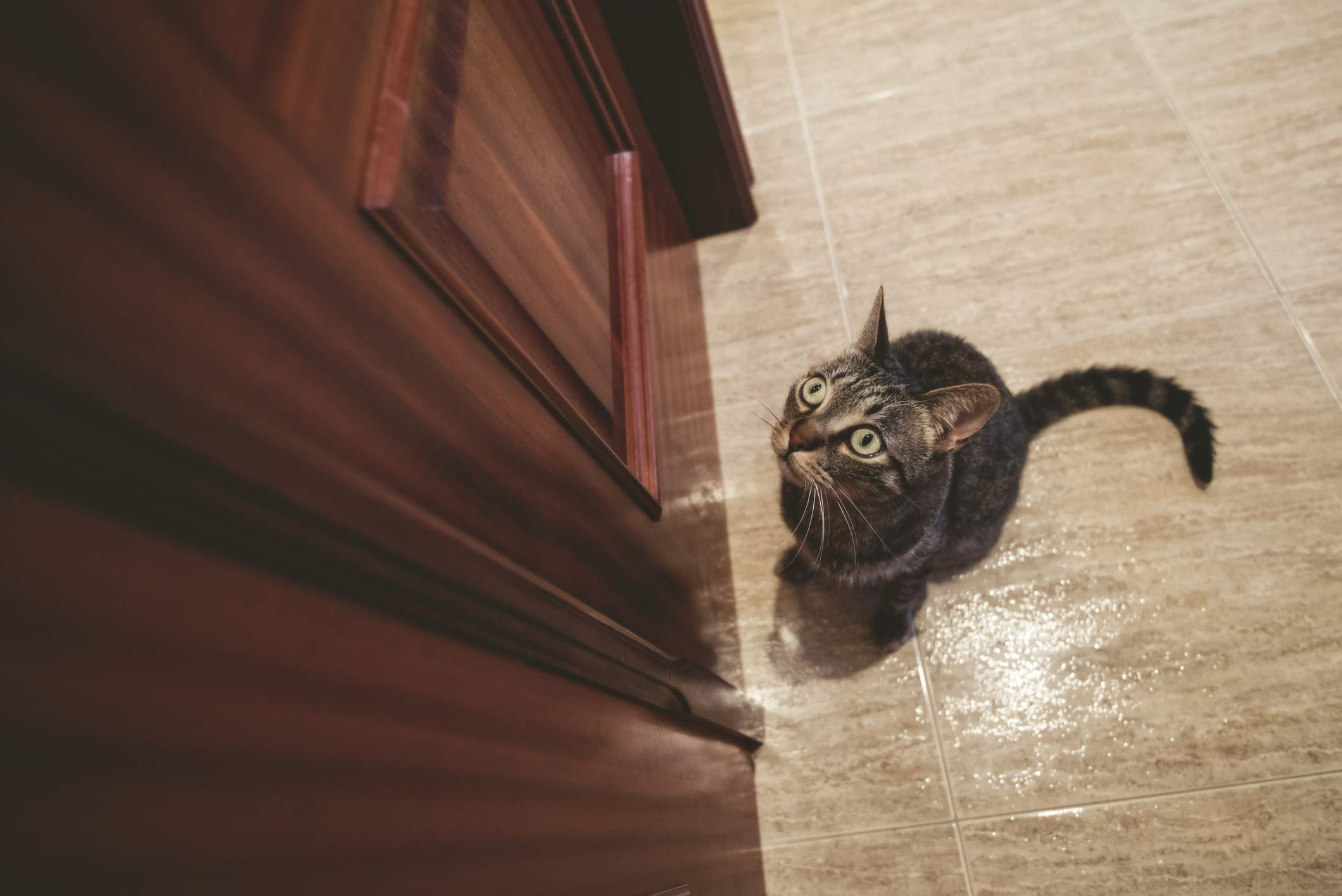 Cat waiting outside closed door