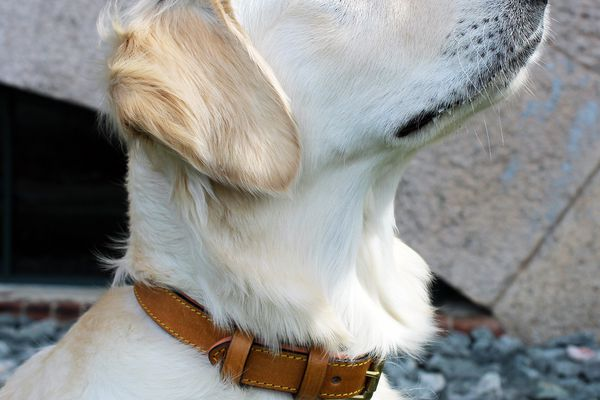 Soft Touch Leather Padded Dog Collar
