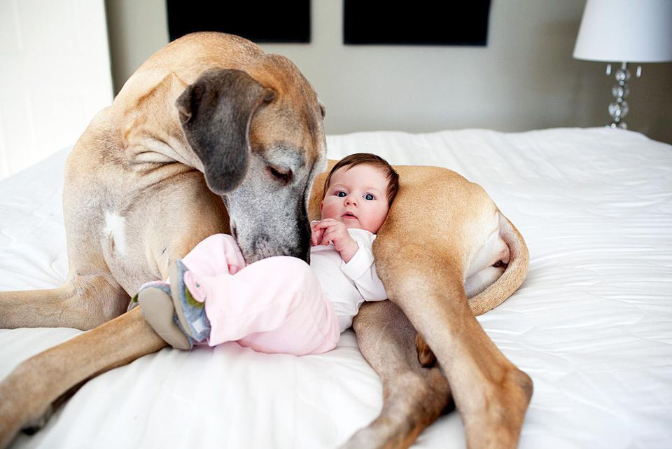 large dog snuggling with baby