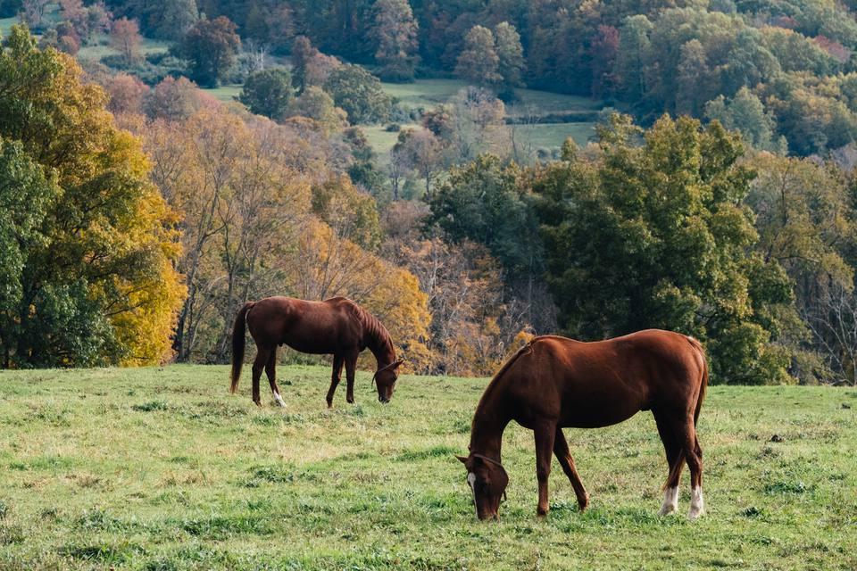 Caballos pastando en otoño