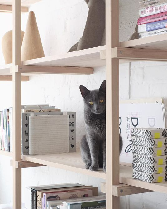 Gray cat sitting on a bookshelf