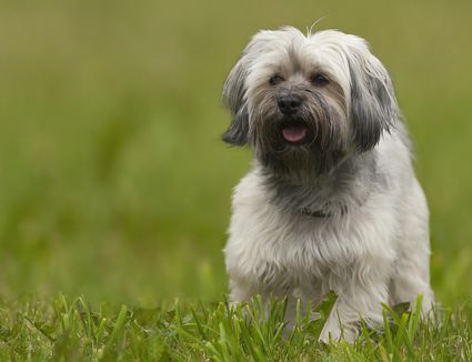 Best Dogs For Small Condos