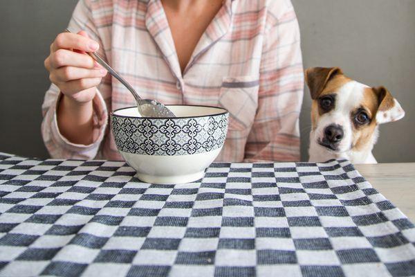 dog looking at bowl of quinoa
