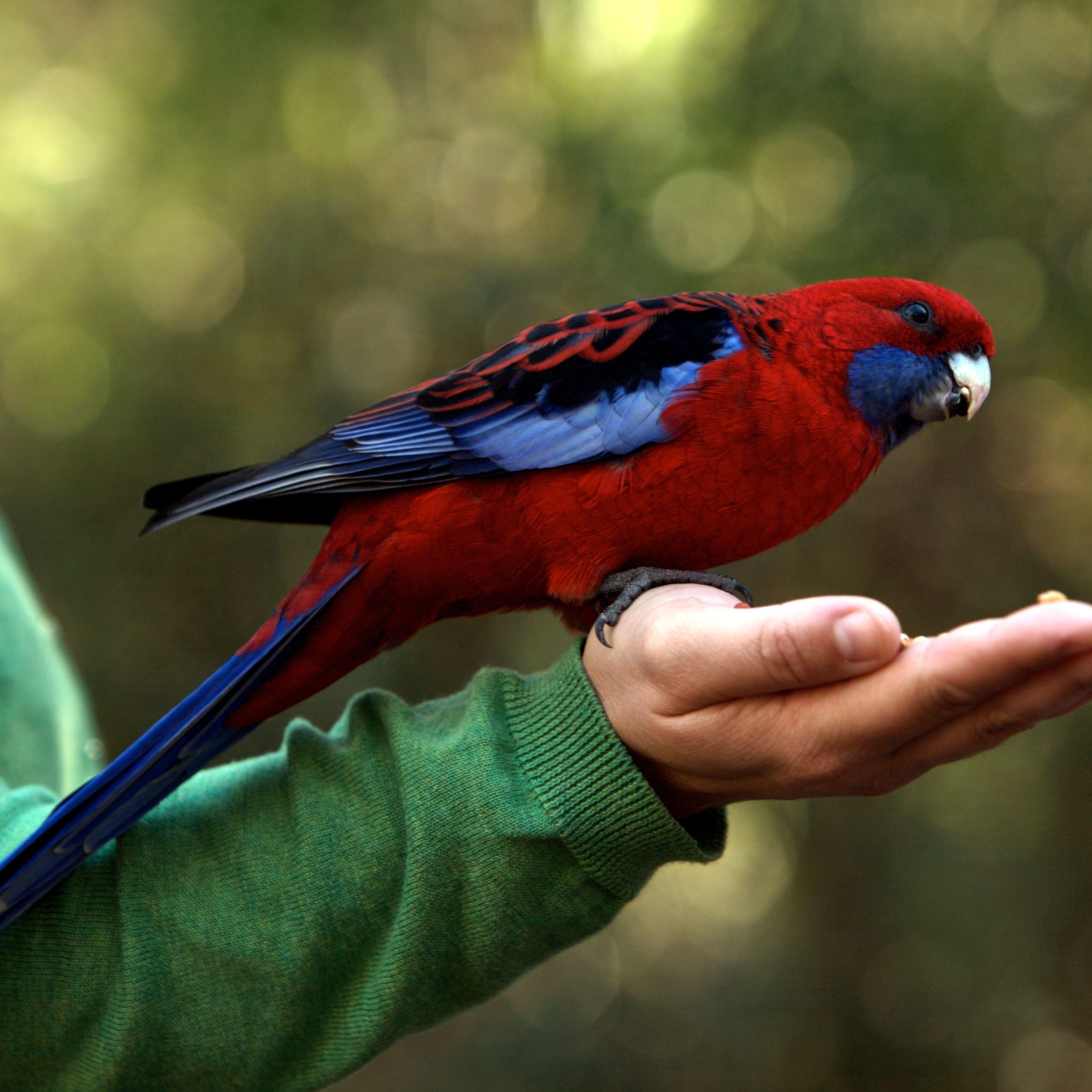 8 Best Large Talking Pet Parrots