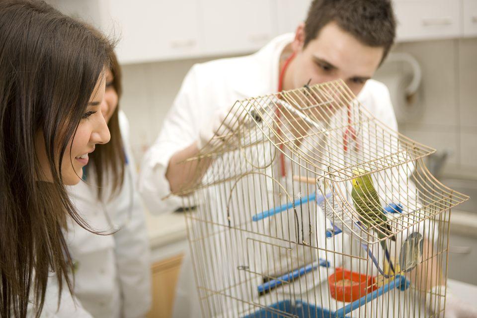 Avian vet