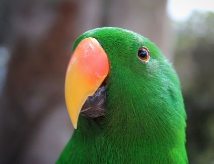 Close-up of the beak of a green parrot