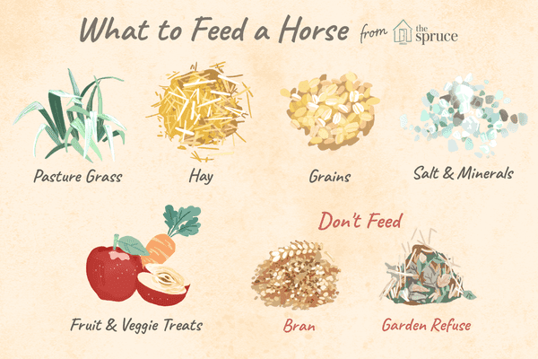 What to feed a horse