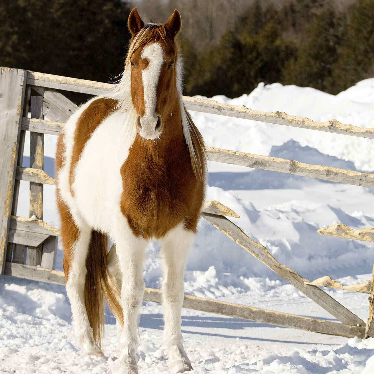 Horse standing in snow by gate.