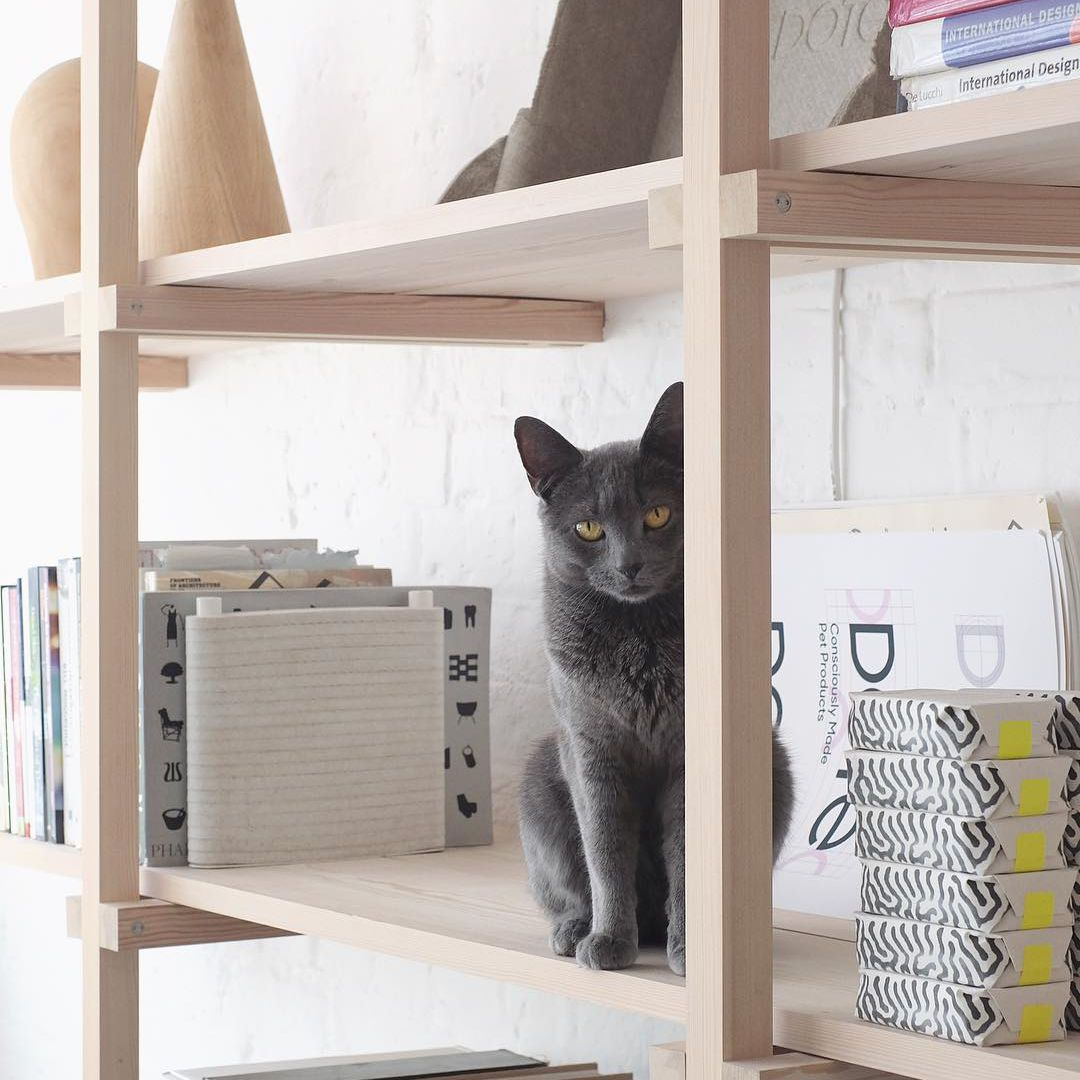 Gray cat sitting on a bookshelf