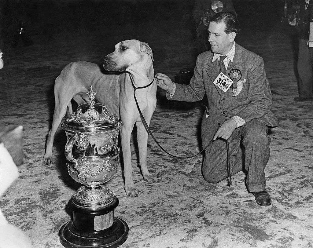 Mr W. G. Siggers with his Great Dane, Ch Elch Elder of Ouborough, Best in Show at the Crufts international championship, UK, 7th February 1953